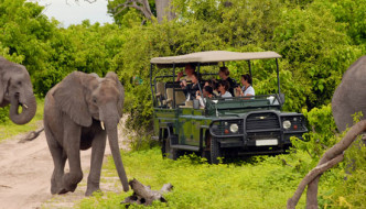 Full Day Kruger Park Safari